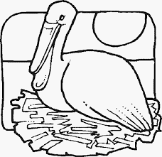 Pelican Fun Bird Coloring Pages