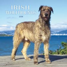 Irish Wolfhound Non Shedding by Wolfhound Non Shedding 28 Images Wolfhound Puppies Breeds