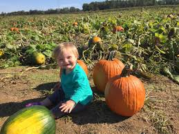 Chesterfield Pumpkin Patch Berry Farm by Pick Your Own Pumpkin Corn Mazes And More