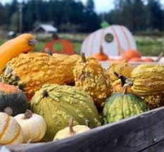 Snohomish Pumpkin Patch by Snohomish County U2013 Northwest Healthy Mama