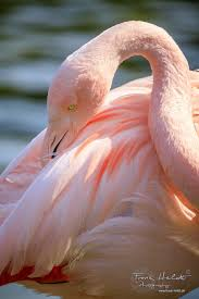 10+ Gorgeous Flamingo Pics To Celebrate Pink Flamingo Day | Veriy Flamingo Fly Notoriously Dapper Liiife Hashtag On Twitter 547 Best Road Images Pinterest Flamingos Bookends 1764 Pink Flamingoes Are Not Trashy Barnes Realjdiddy 25 Unique Color Ideas Birthday Stormy Monday Presents At Bulls Head Barnes Ldon 02 Oct 2017 10 Gorgeous Pics To Celebrate Day Veriy 76 Pink Flamingo Shirt Me Feat My Dog Youtube Curreny Type Beat Free Beat Prodmassology Real_trademark