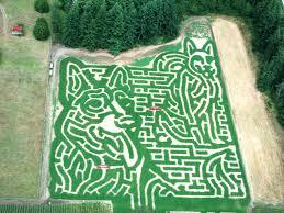 Pumpkin Patch Tacoma Wa by Rutledge Corn Maze Llc