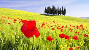 Tuscany Wallpaper 30311 1920x1080 Px HDWallSource