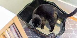 best cat litter boxes the best cat litter boxes wirecutter reviews a new york times