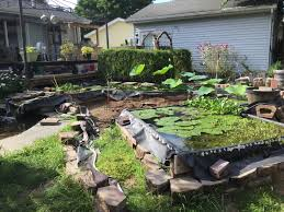 The Frog Whisperer – Folks Frog Lodge Gabe Feathers Mcgee The Whisper Folks How To Create A Wildlife Pond Hgtv Building Ogfriendly Build On Budget Youtube Backyard Home Landscapings Ideas Garden Diy Project Full Video To Make Chickadee Habitat Design And Build Wildlife Pond Saga For Frogs Part 5 Outdoor Patio Cute Round Koi Mixed With