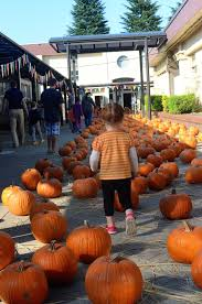 Kent Ohio Pumpkin Patches by Adventures In Japan Our Week