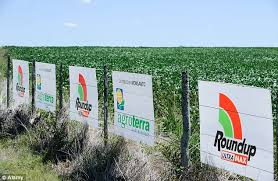 Large Scale Use Roundup Weed Killer Whose Main Ingredient Is Glyphosate