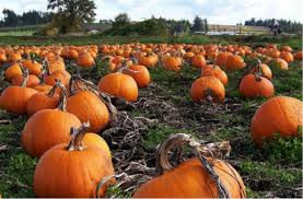 Southern Ohio Pumpkin Patches by The Top 5 Pumpkin Patches In Tallahassee You Need To Visit This