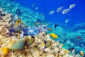 Underwater World Ocean Fish coral reef wallpaper