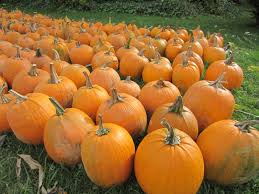 Hillcrest Farms Pumpkin Patch by Family Style Fun Is In Season This Autumn 2 Press Papers