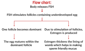 Shedding Of Uterine Lining Before Period by Menstrual Cycle All About Pregnancy Pregakem