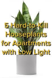 Top of Plants That Need No Light Ffebeabbe Low Light