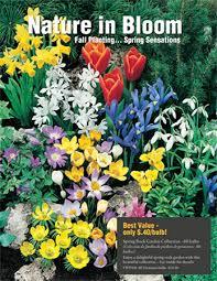 fall flower bulbs sle catalog tom wat fundraising