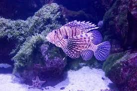 poisson aquarium de la rochelle picture of aquarium la