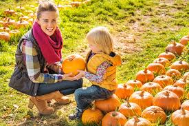 Pumpkin Patch Tampa 2014 by Best Pumpkin Patches In Los Angeles Cbs Los Angeles