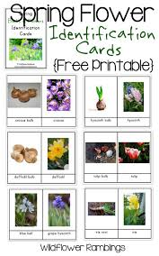 flower bulb identification cards free printable