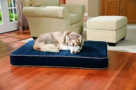 The Best Orthopedic Dog Beds