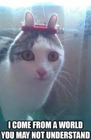 cats and yogurt this cat really likes yogurt imgur