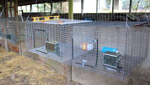 Hanging All-Wire Cages For Rabbit Health | Rabbit Barn Ideas ... Learn How To Build A Rabbit Hutch With Easy Follow Itructions Plans For Building Cages Hutches Other Housing Down On 152 Best Rabbits Images Pinterest Meat Rabbits Rabbit And 106 Barn 341 Bunnies Pet House Our Outdoor Housing Story Habitats Tails Hutch Hutches At Cage Source Best 25 Shed Ideas Bunny Sheds Shed Amazoncom Petsfit 425 X 30 46 Inches Cages Exterior Cstruction Nearly Complete Resultado De Imagem Para Plans Row Barn Planos Celeiro
