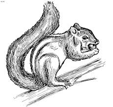 Animals Coloring Pages Kids Website For Parents