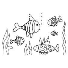 Picture Of 5 Koi Fish