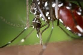 lavendel gegen mücken anleitung tipps moskitofrei