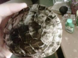 turt shell c f12