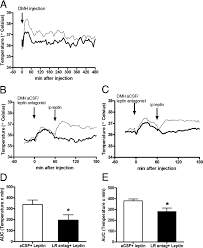 100 Dmh Australia Leptin Action In The Dorsomedial Hypothalamus Increases