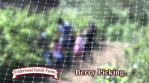Pumpkin Patch Animal Farm In Moorpark California by Underwood Family Farms U0027 Somis Location Youtube