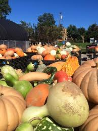 Best Pumpkin Patches In Cincinnati by 7 Places To Pick Pumpkins In Lexington Ky Lexington Ky Real