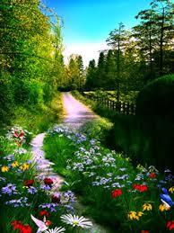 Download Beautiful Colors Flower Mobile Wallpaper