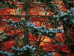 Christmas Tree Shop Jobs Foxboro Ma by Harry U0027s 2 Cents Page 3 Harryshots
