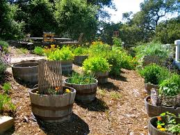 Wine Barrel With Rustic Outdoor Flower Pots L Andscape And Planter