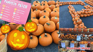 Live Oak Canyon Pumpkin Patch 2015 by Visiting The Pumpkin Patch So Meny Pumpkins Youtube