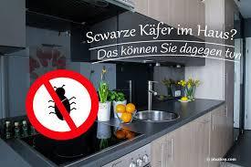 schwarze käfer im haus um wen handelt es sich was tun