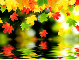Wallpaper With Colorful Falling Leaves On Water