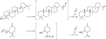 Chair Conformations Of Menthol by Comparisons Of Squalene Cyclization To Hopene Cyclization Top