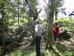 Sinkholes Alachua County Fl by In Archer Stalled Plan For Wastewater Plant Still Causing Rifts