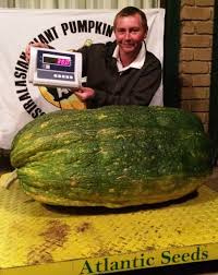 Worlds Heaviest Pumpkin In Kg by Atlantic Seeds By The Pumpkin Lady Seeds