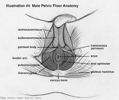 Hypertonic Pelvic Floor Exercises by Anatomy Proaxis Therapy Pelvic Pt