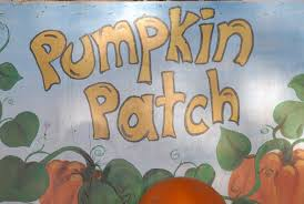 Flagstaff Pumpkin Patch Train by Find Pick Your Own Pumpkin Patches In Arizona Corn Mazes And