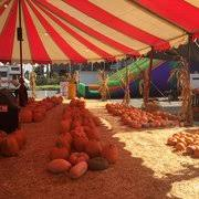 Best Pumpkin Patch Torrance by Acostas Pumpkin Patch And Christmas Trees 41 Photos U0026 25 Reviews
