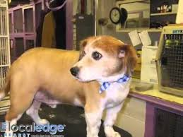 Hollycrest Bed And Biscuit by Tallyho Kennels Taylors Sc 29687 Youtube