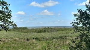 Lake Jesup Observation Platform Trail CLOSED Florida