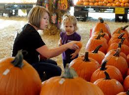 Pumpkin Patch Tampa by Pumpkin Sales At Brandon Patch Benefit Area Schools Tbo Com