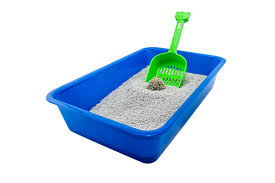 best cat litter boxes best clumping cat litter which product performs the best
