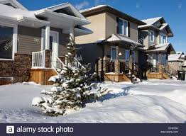 Best Real Christmas Tree Type Canada by Xmas Tree Real Stock Photos U0026 Xmas Tree Real Stock Images Alamy