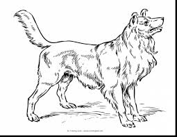 Wonderful Real Dog Coloring Pages With Of Puppies And Yorkie