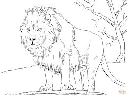 Click The Male African Lion Coloring Pages