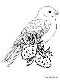 Birds Pinegrosbeak Animals Coloring Pages